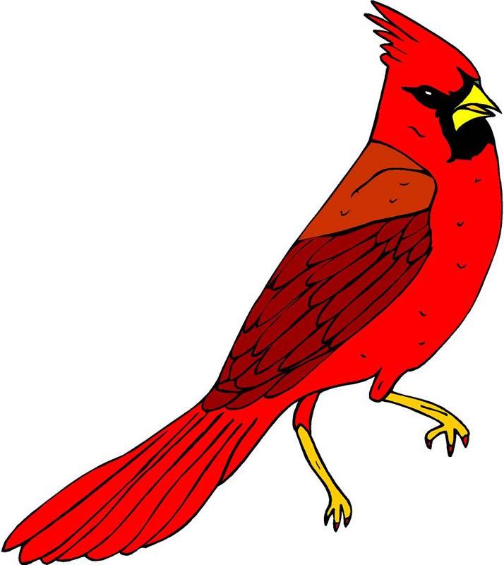 714x800 Cardinal Clipart Red Cardinal