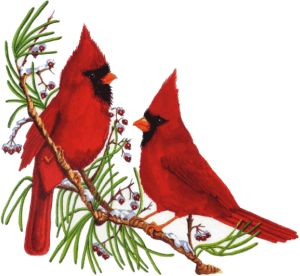300x276 Cardinal Clipart Snowy Branch