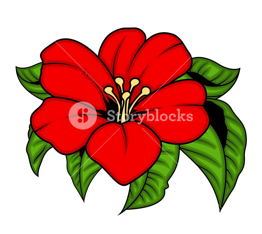 1000x893 Red Flower With Leaves Vector Illustration Royalty Free Stock