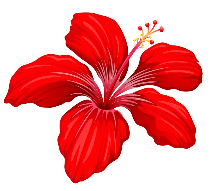 736x643 Red Flower Clip Art Cliparts