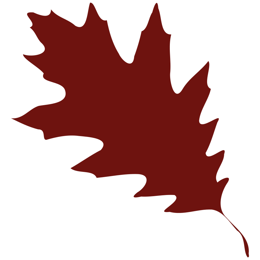 900x900 Maple Leaf Clipart Leaf Shape