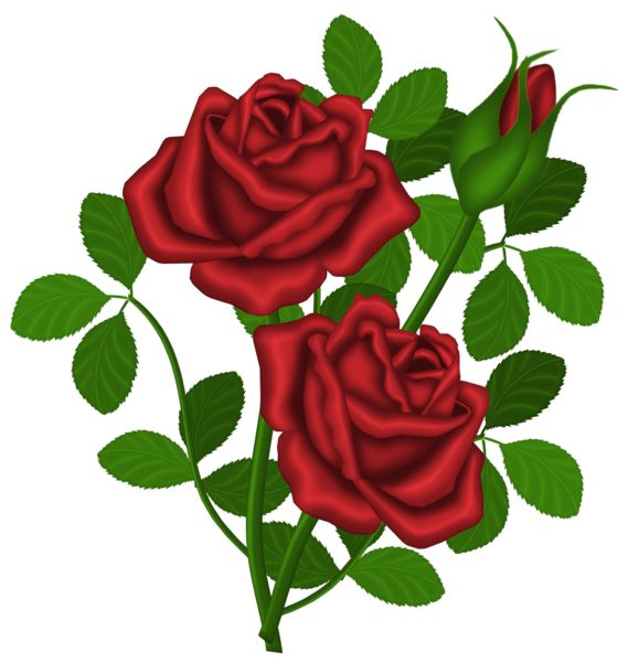 569x600 198 Best Clipart Red Roses Images Plants