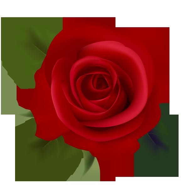 615x591 Red Rose Clip Art Clipart Panda