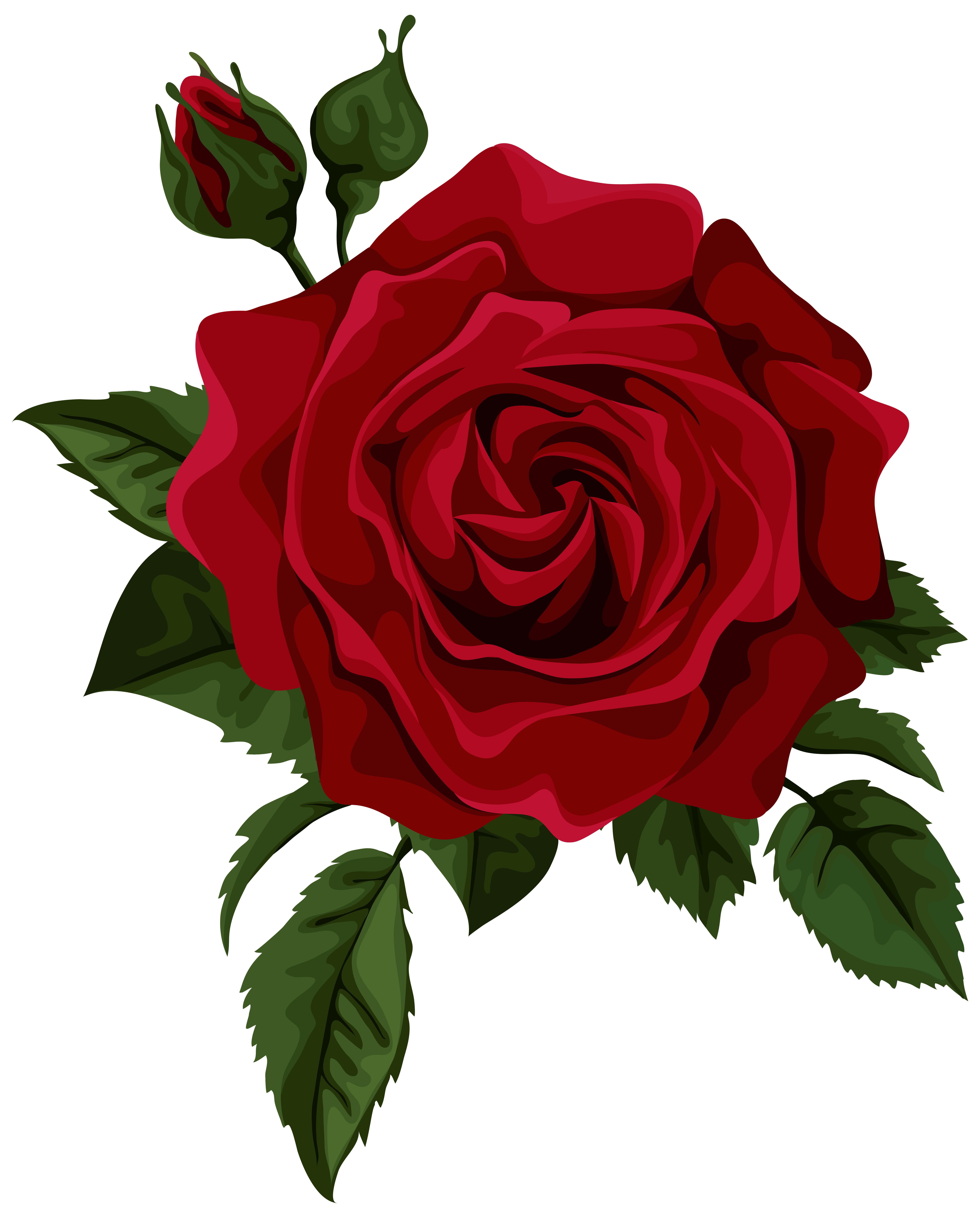 5632x7000 Roses Red Rose With Bud Transparent Clip Art Picture