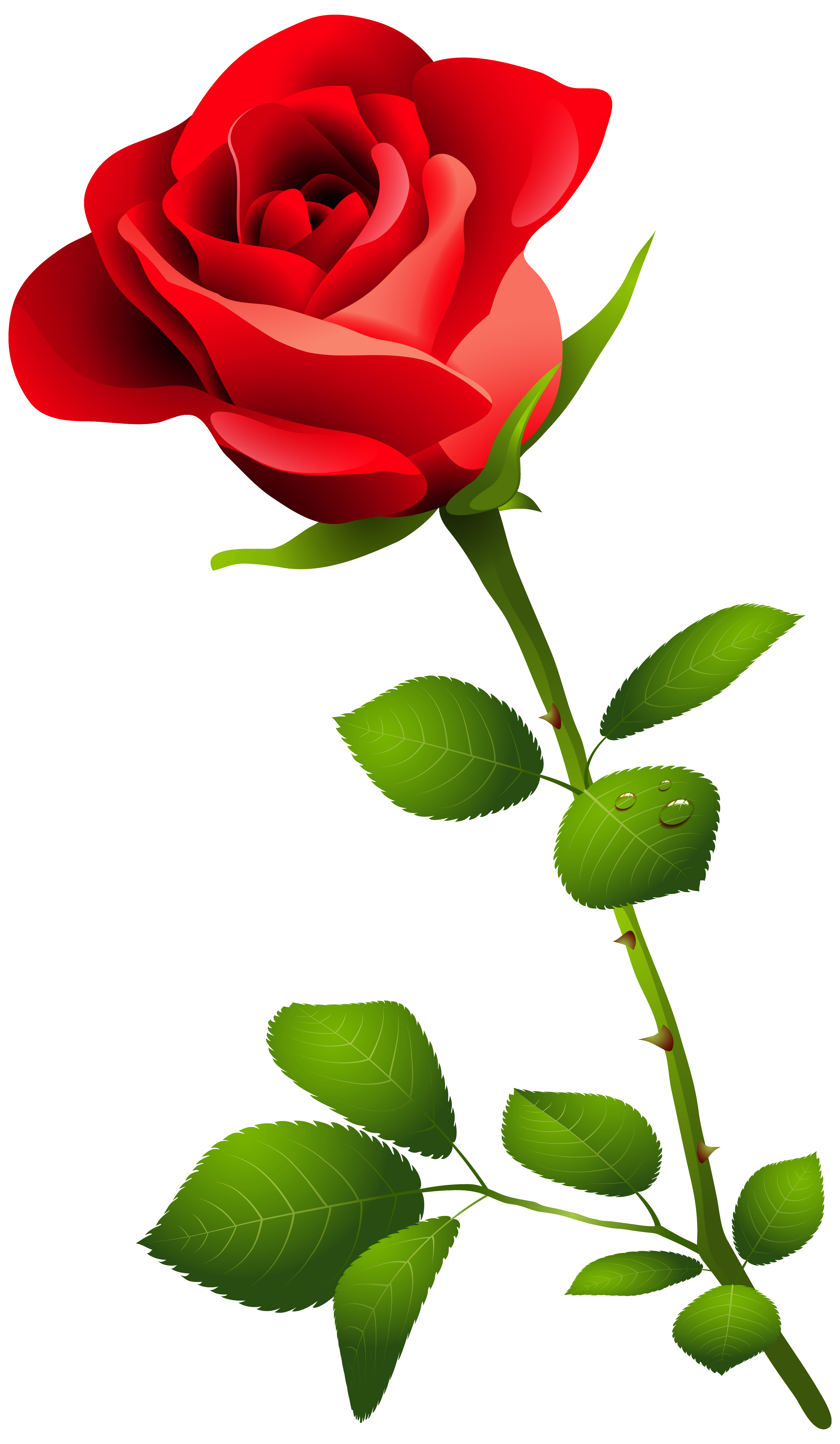 3658x6286 Edit And Free Download Red Rose With Stem Png Clipart Image