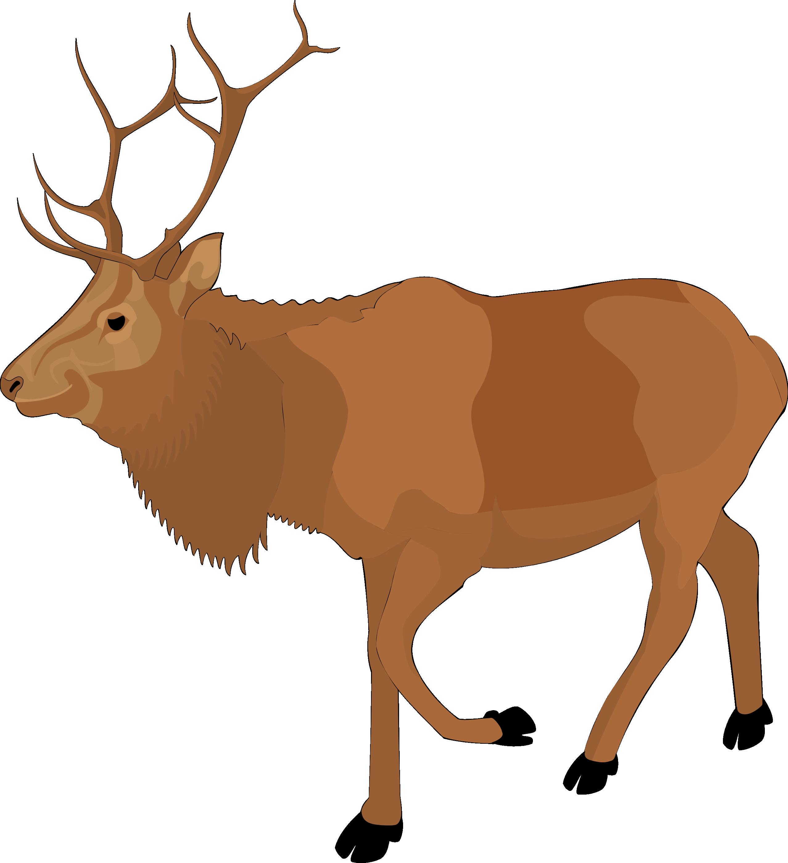 2555x2801 Clip Art Reindeer Clipart