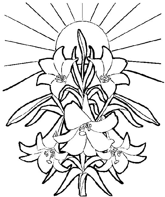544x648 White Flower Clipart Easter