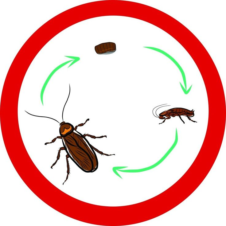 736x736 10 best Cockroach images Stock photos, Biscuits and