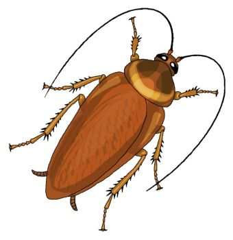 340x350 Cockroach kakerlake explore on deviantart clip art