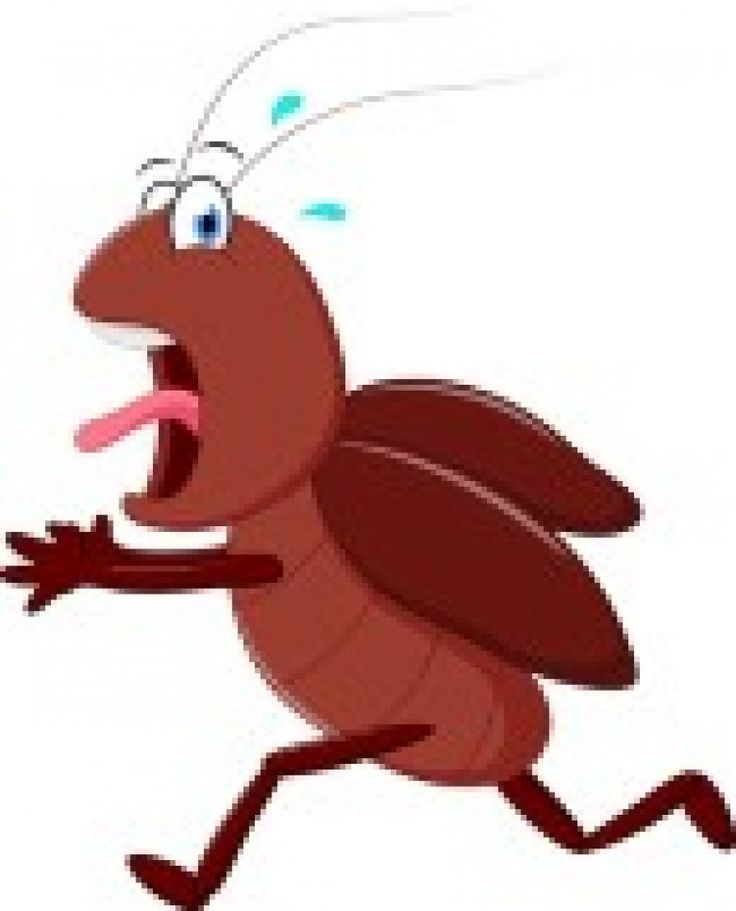 736x911 Cockroaches tomb clipart