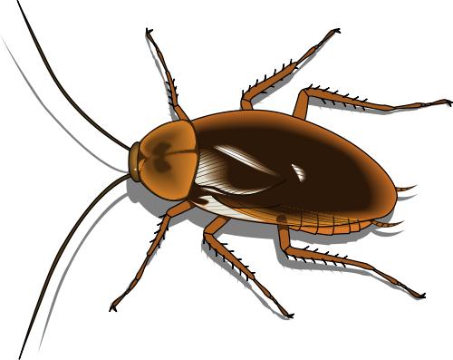 500x397 Top 81 Cockroach Clipart