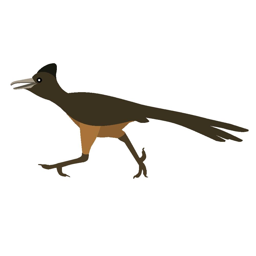 1000x1000 Roadrunner clipart bird