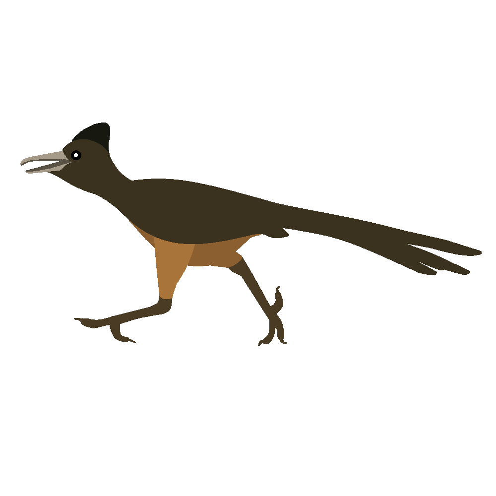 1000x1000 Clipart illustration road runner