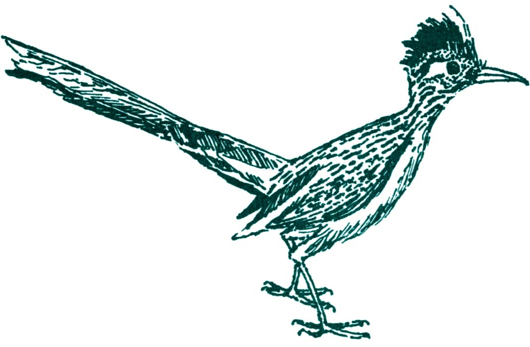 1067x698 Roadrunner Clipart Drawing