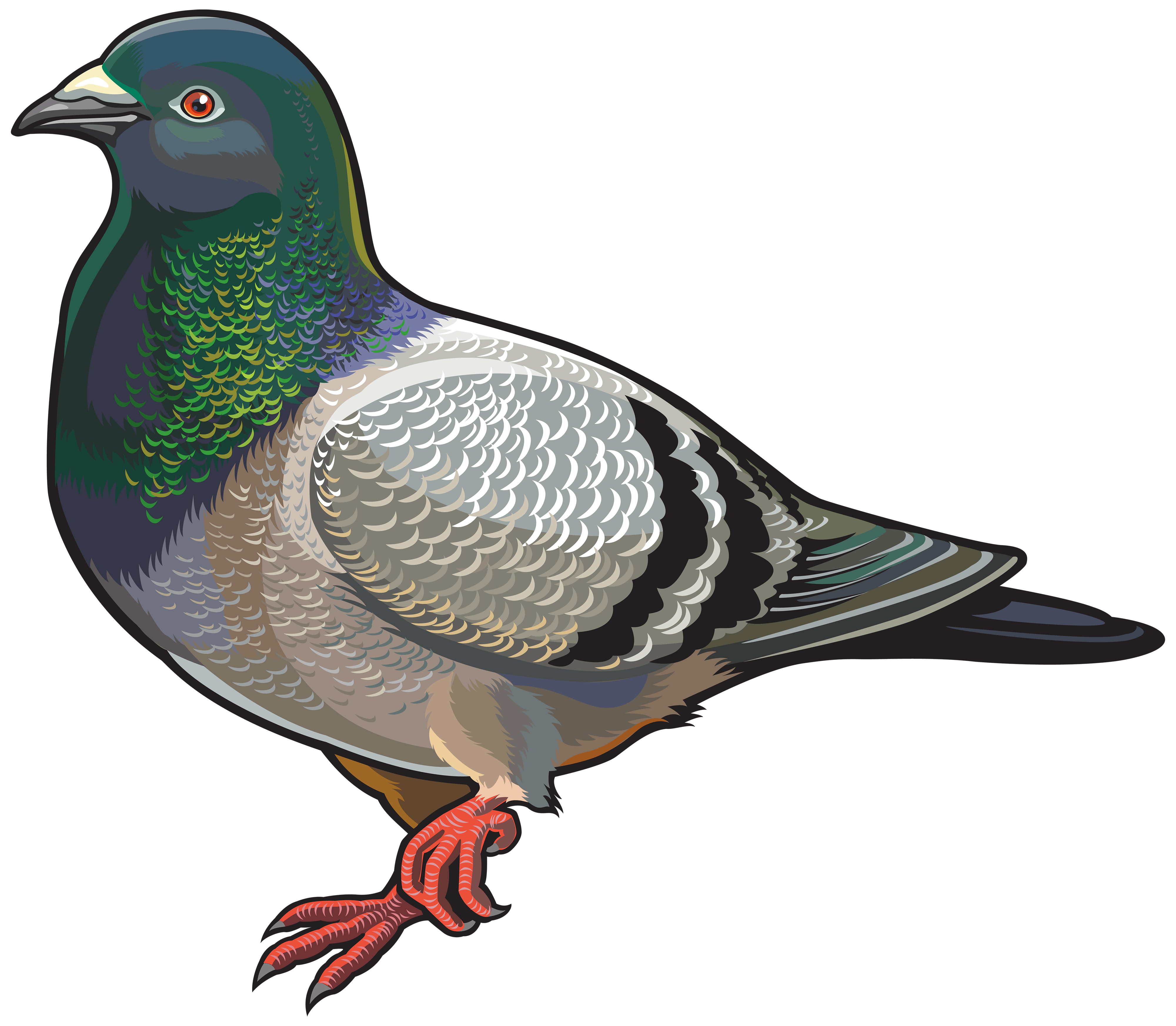 4000x3489 Pigeon Png Clipart