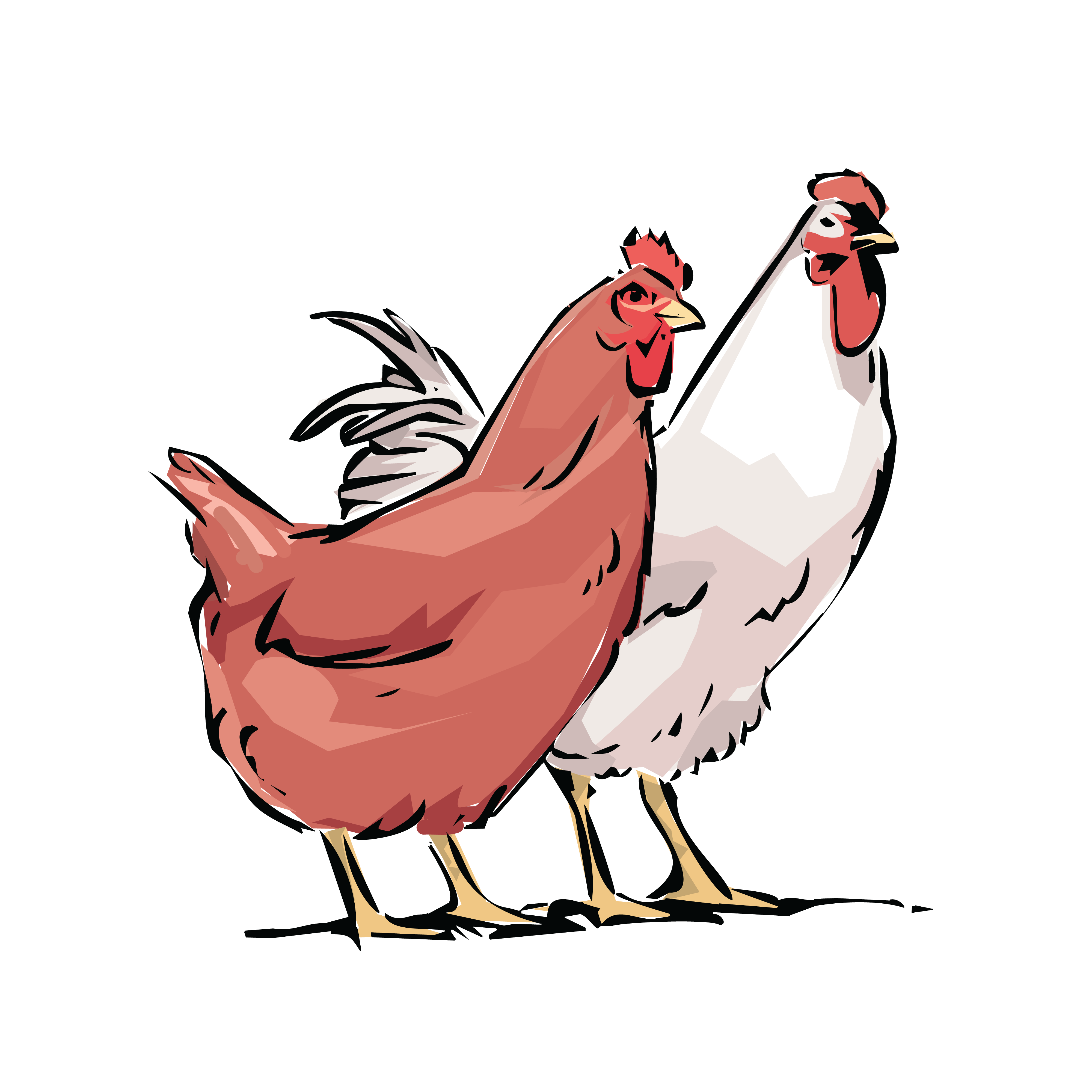 4000x4000 Free Clipart Of A Chicken Hen And Rooster