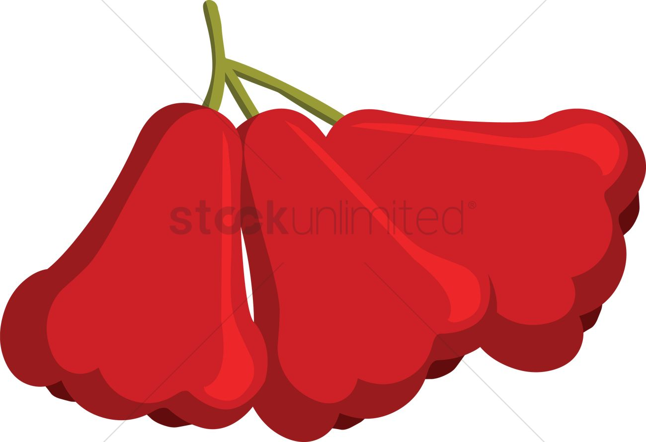 1300x890 Free Rose Apple Over A White Background Vector Image