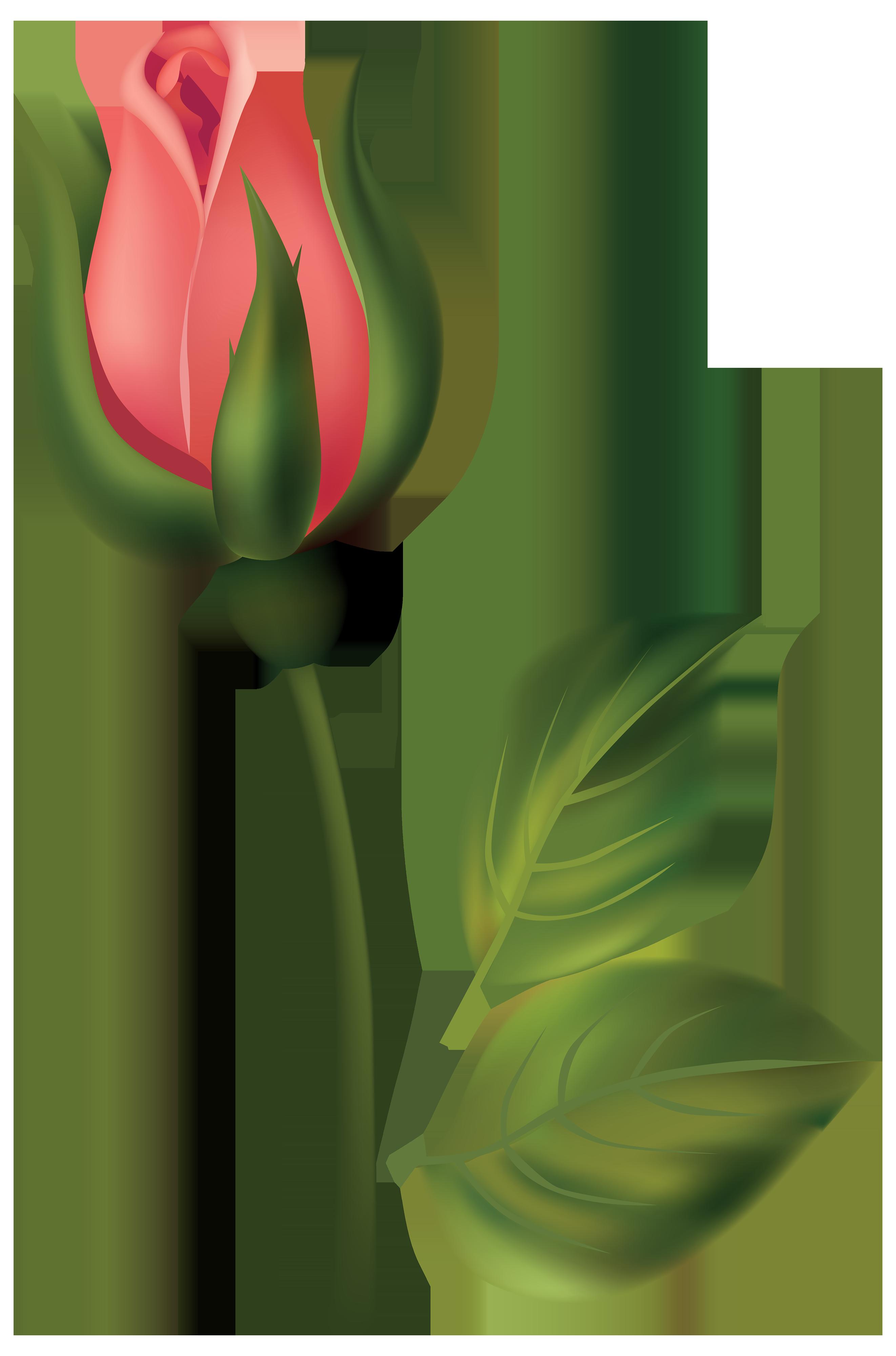 2644x4000 Orange Rose Bud Clip Art Cliparts