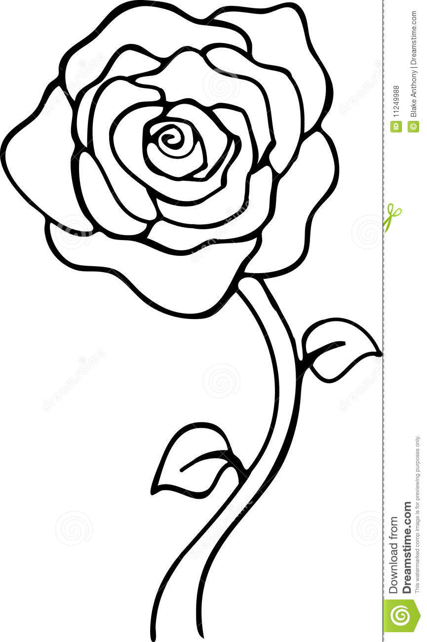 865x1300 Rose Black And White Clipart