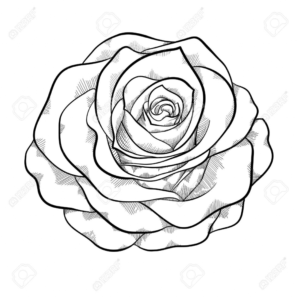1024x1024 Rose Black And White Drawing Black And White Rose Drawing
