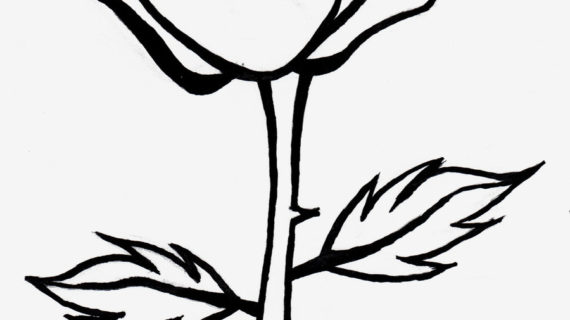 570x320 Rose Black And White Drawing Rose Clipart Black And White