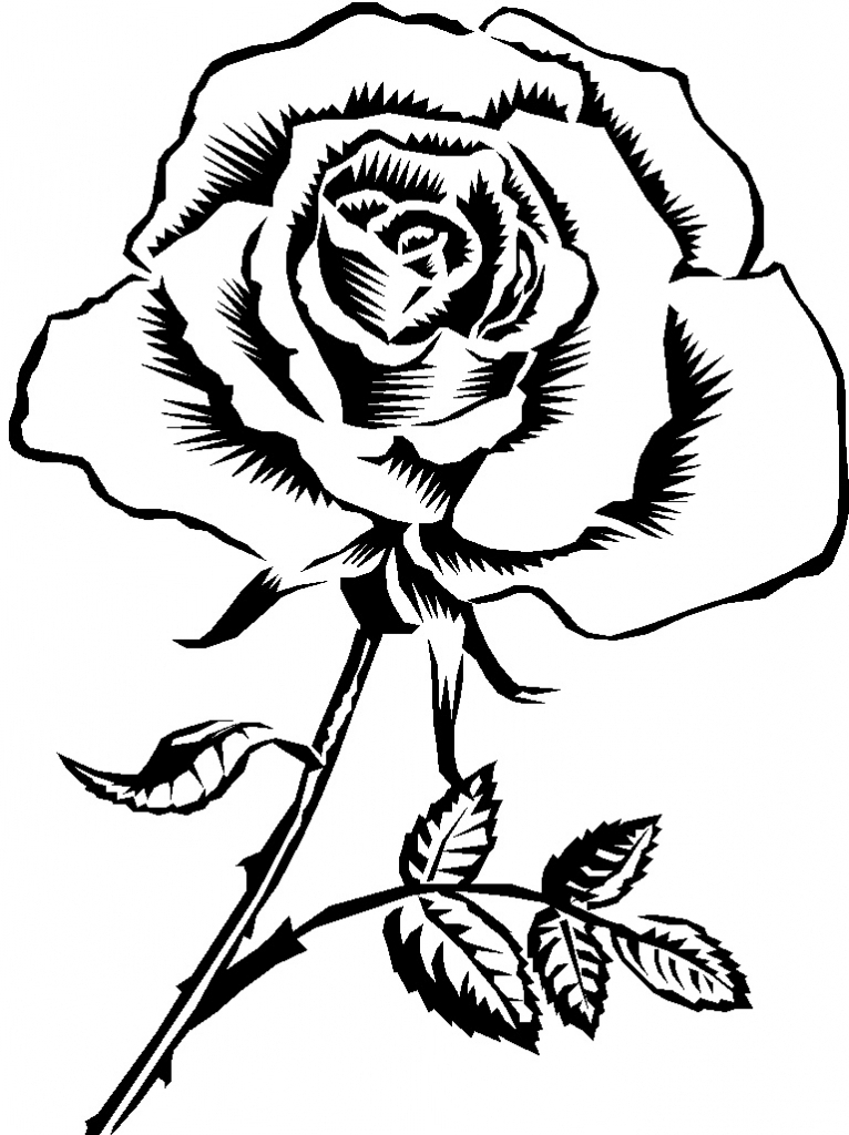 766x1024 Rose Drawing Black And White Rose Black And White Drawing Clipart
