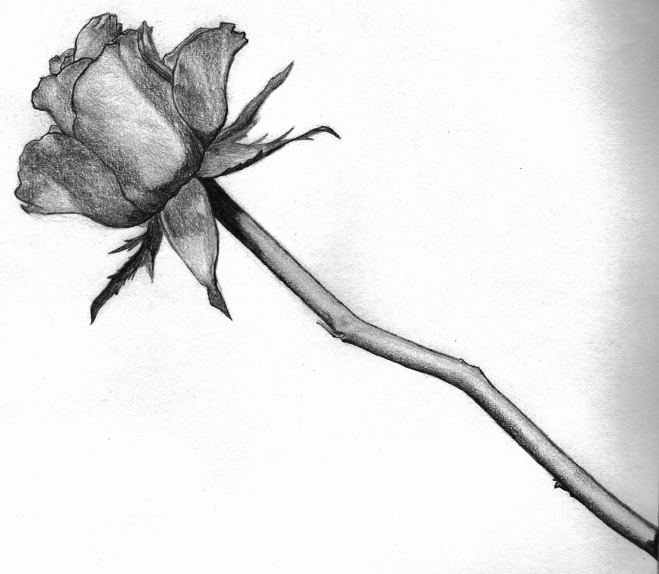 1324x1153 Rose In Black And White