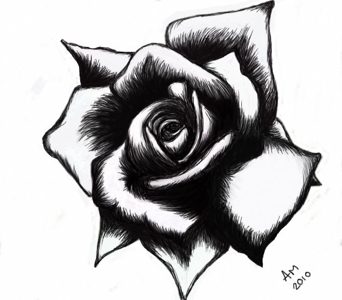 700x615 Rose Tattoo Black And White