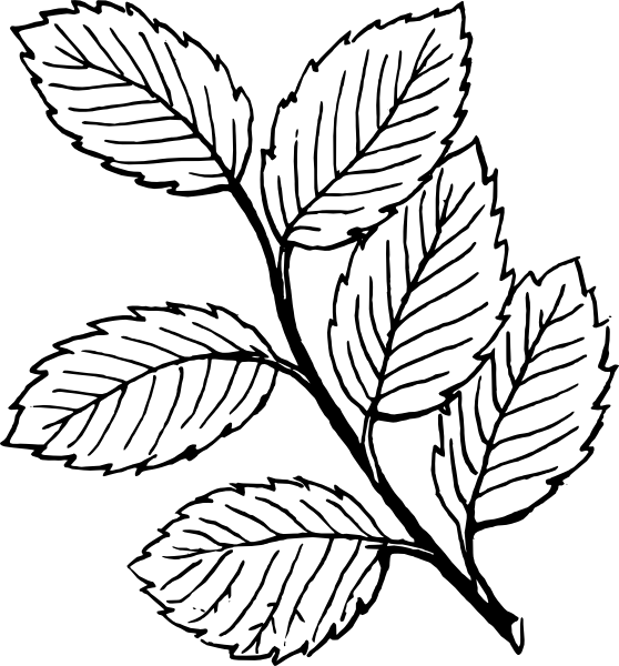 558x600 Rose Leaves Clipart