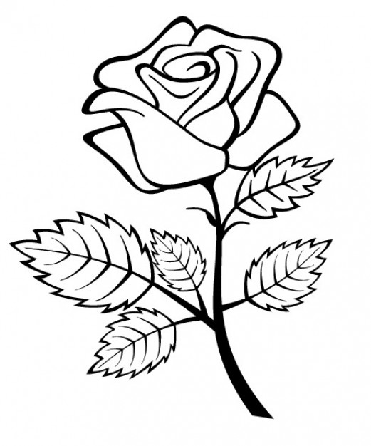521x626 Rose Outline Vectors, Photos And Psd Files Free Download
