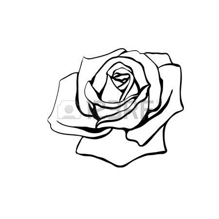 450x450 Rose Sketch. Black Outline On White Background. Vector