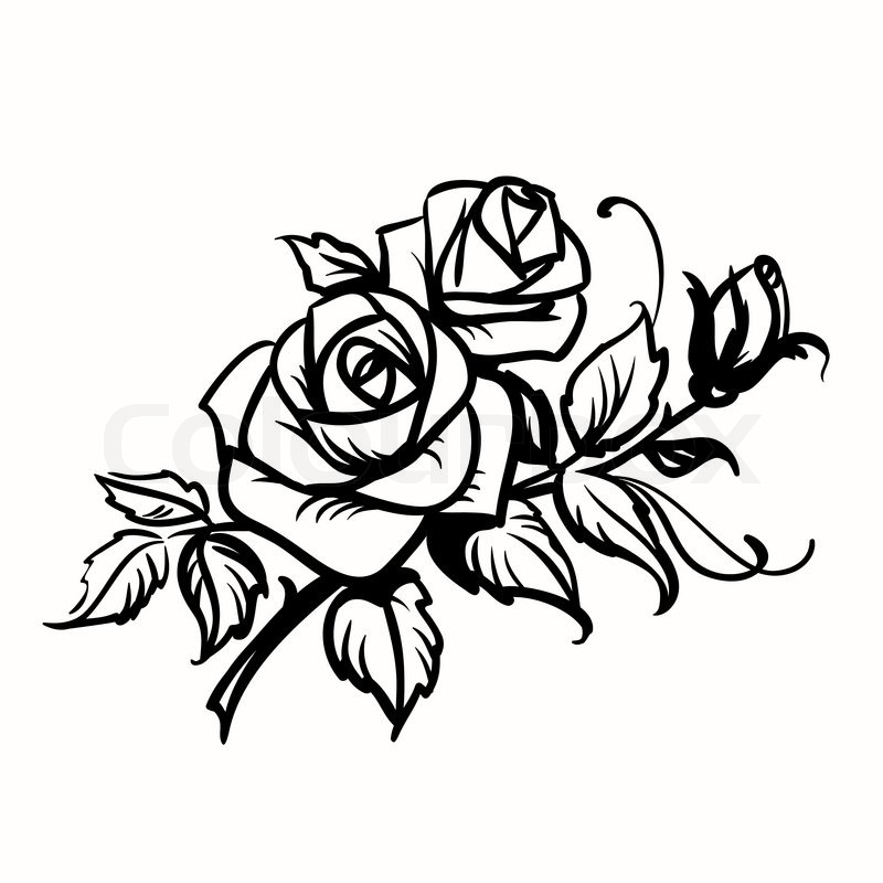 800x800 Roses. Black Outline Drawing On White Background Stock Vector