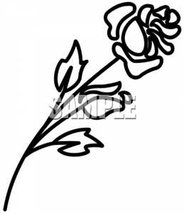 259x300 And White Outline Of A Rose