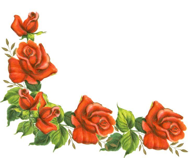 736x607 Pink Rose Clipart Borders Vintage Color