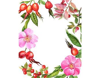340x270 Watercolour Rose Flower Frame Border Clip Art Graphic Design