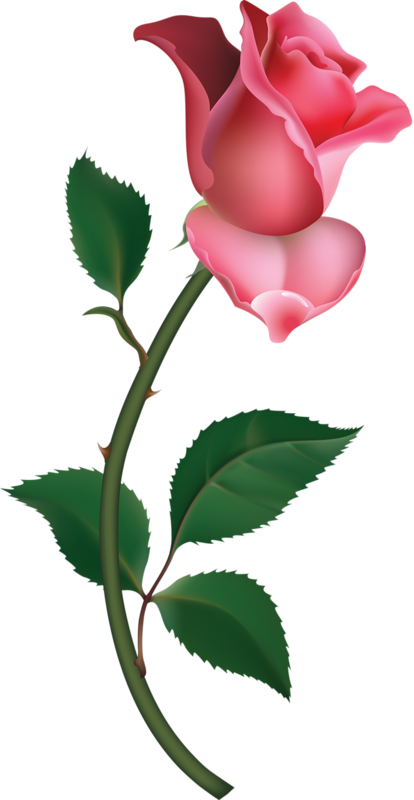 414x800 Large Pink Rose Bud Painting Png Clipartu200b Gallery Yopriceville