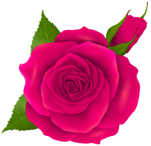 600x579 Pink Rose And Bud Transparent Png Clip Art Roses
