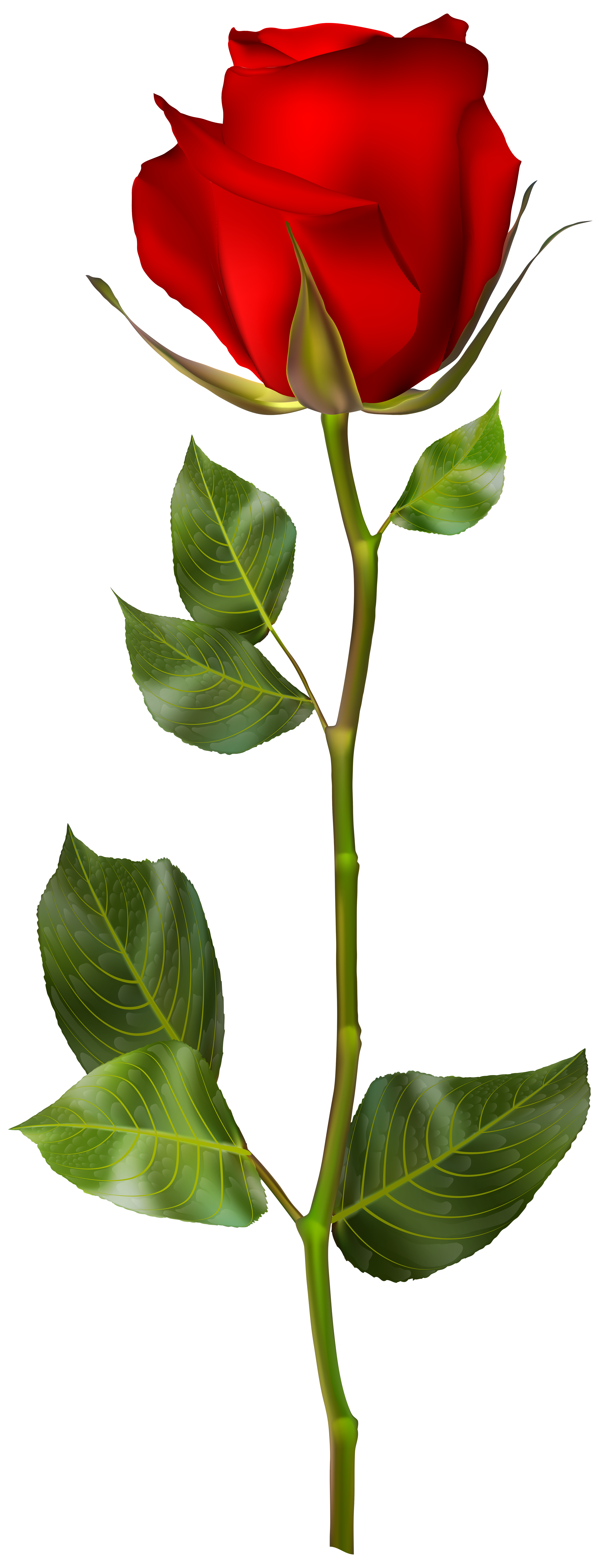 Rose Bud Clipart Free Download Best Rose Bud Clipart On Clipartmag Com