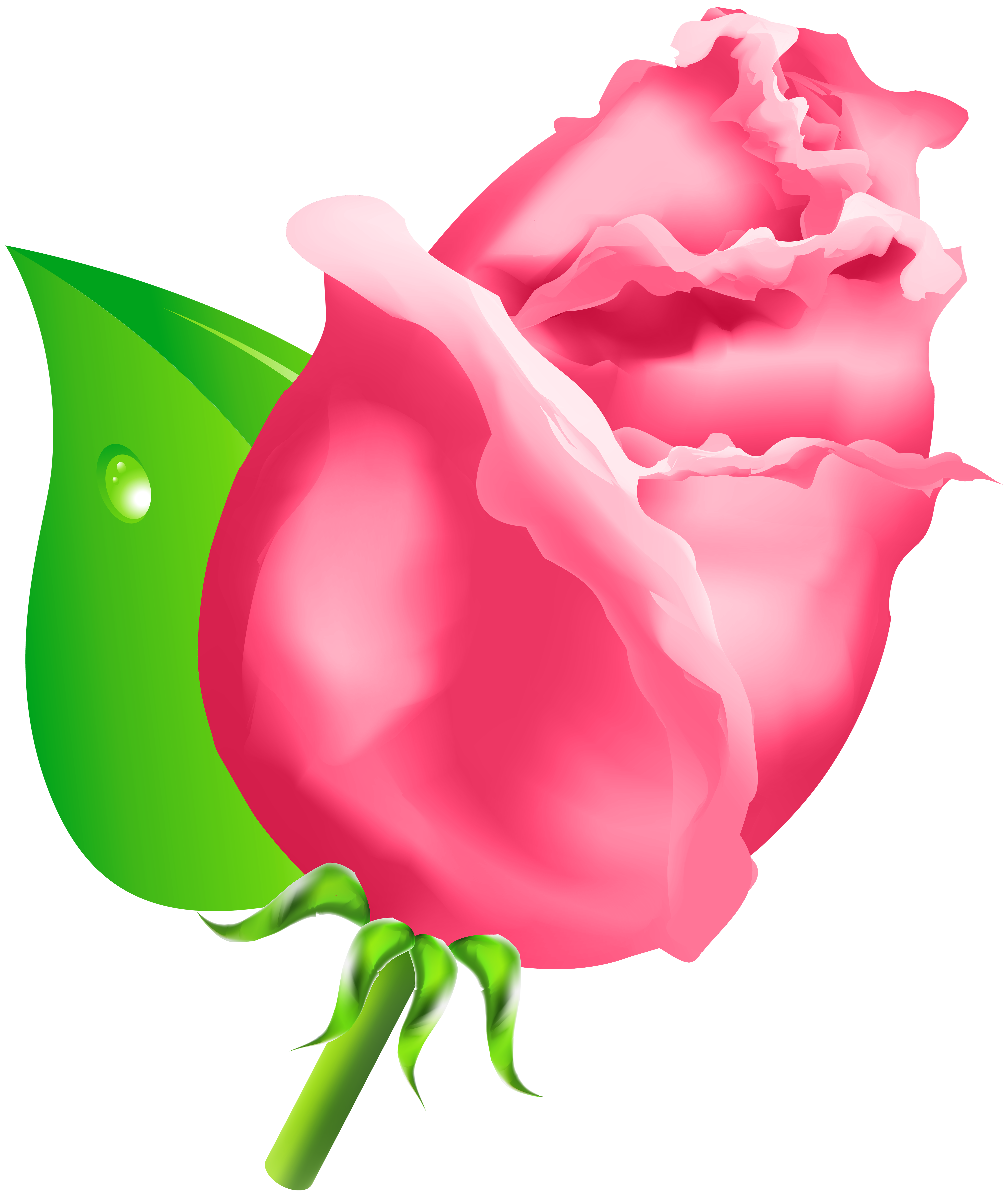 5051x6000 Rose Bud Png Clipart