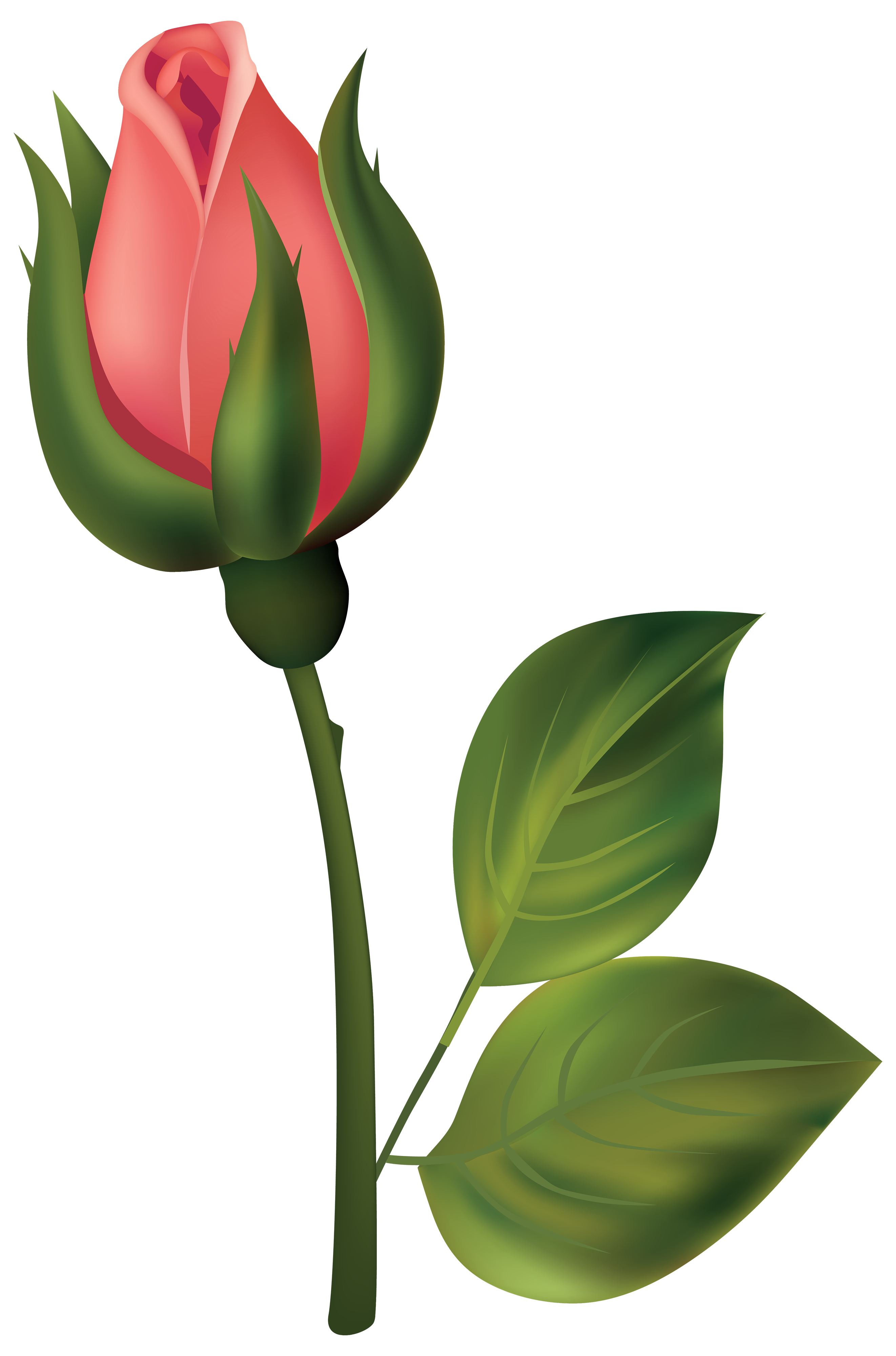 2644x4000 Stem Red Rose Bud Png Clipart