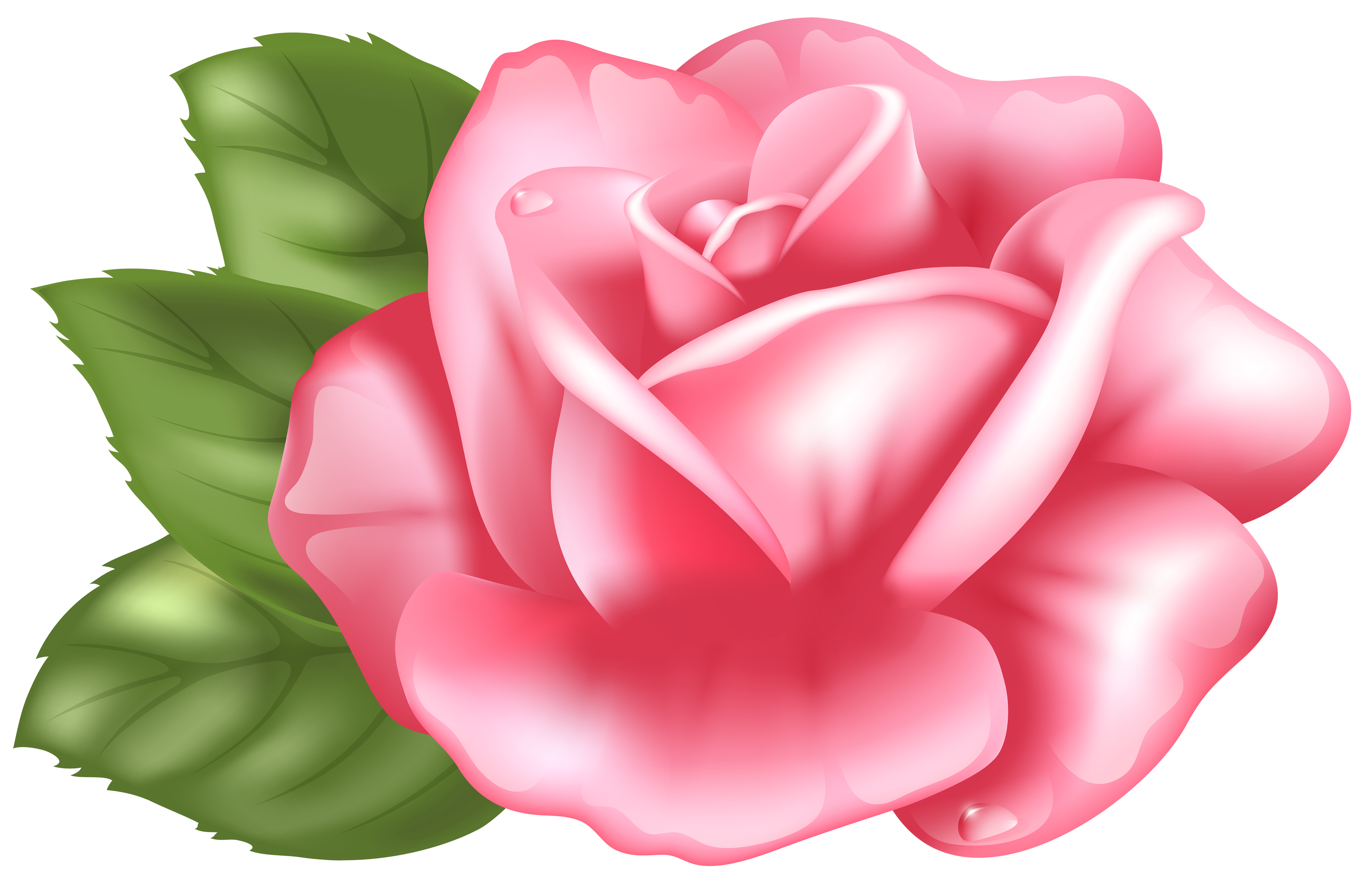 6000x3868 Top 78 Pink Rose Clipart