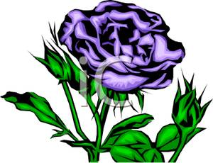 300x230 Purple Rose Plant Clip Art Image