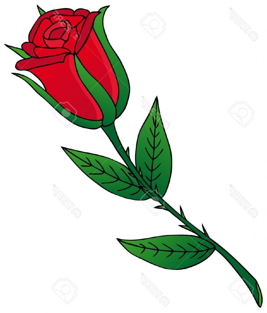 874x1024 Cartoon Drawing Rose Rose Cartoon Drawing