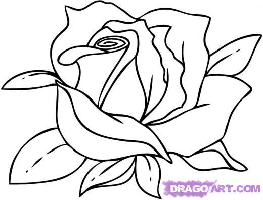520x396 Cartoon Sketch Of Rose
