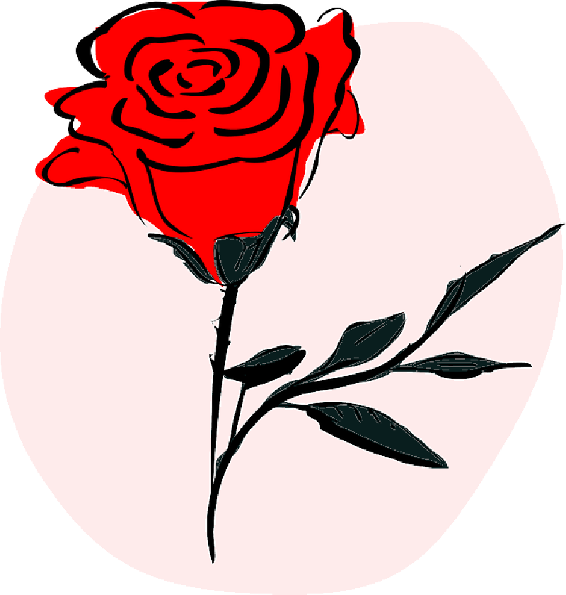 800x842 Red, Drawing, Flower, Coloured, Flowers, Cartoon, Love