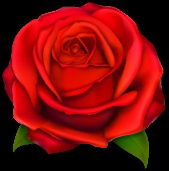 333x337 Cartoon Rose Clipart Rose Clipart