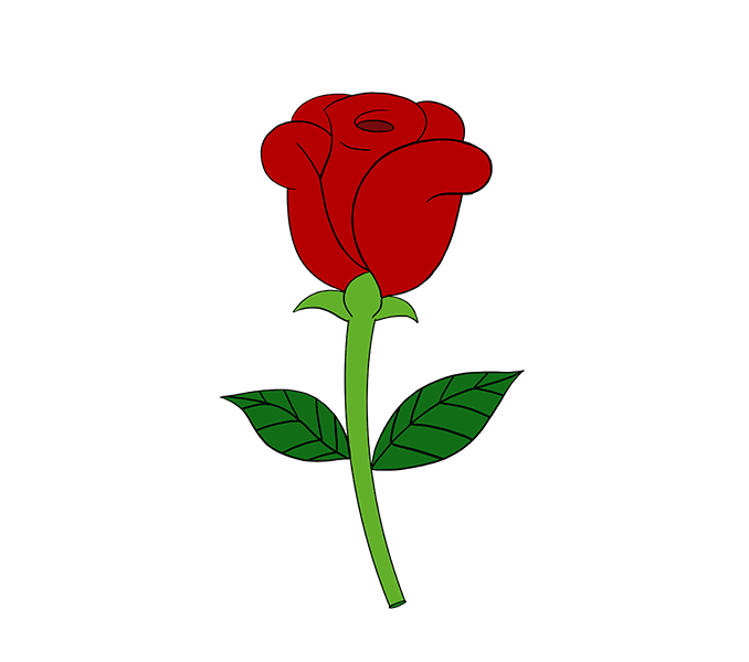 678x600 How To Draw A Simple Rose Easy Drawing Guides