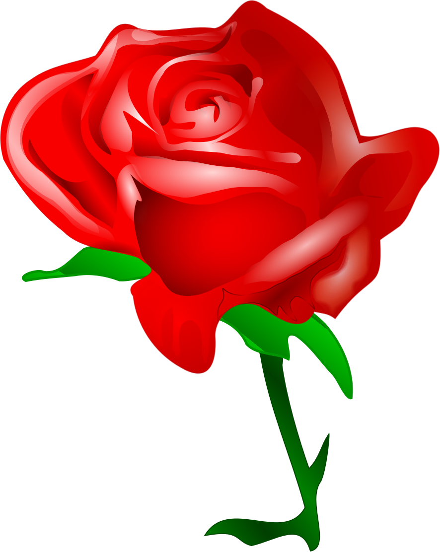 886x1112 Red Rose By @tomas Arad, A Red Rose Bigger., On @openclipart