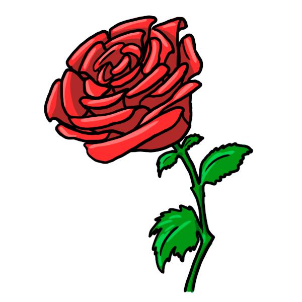 600x600 Rose Cartoon Drawing