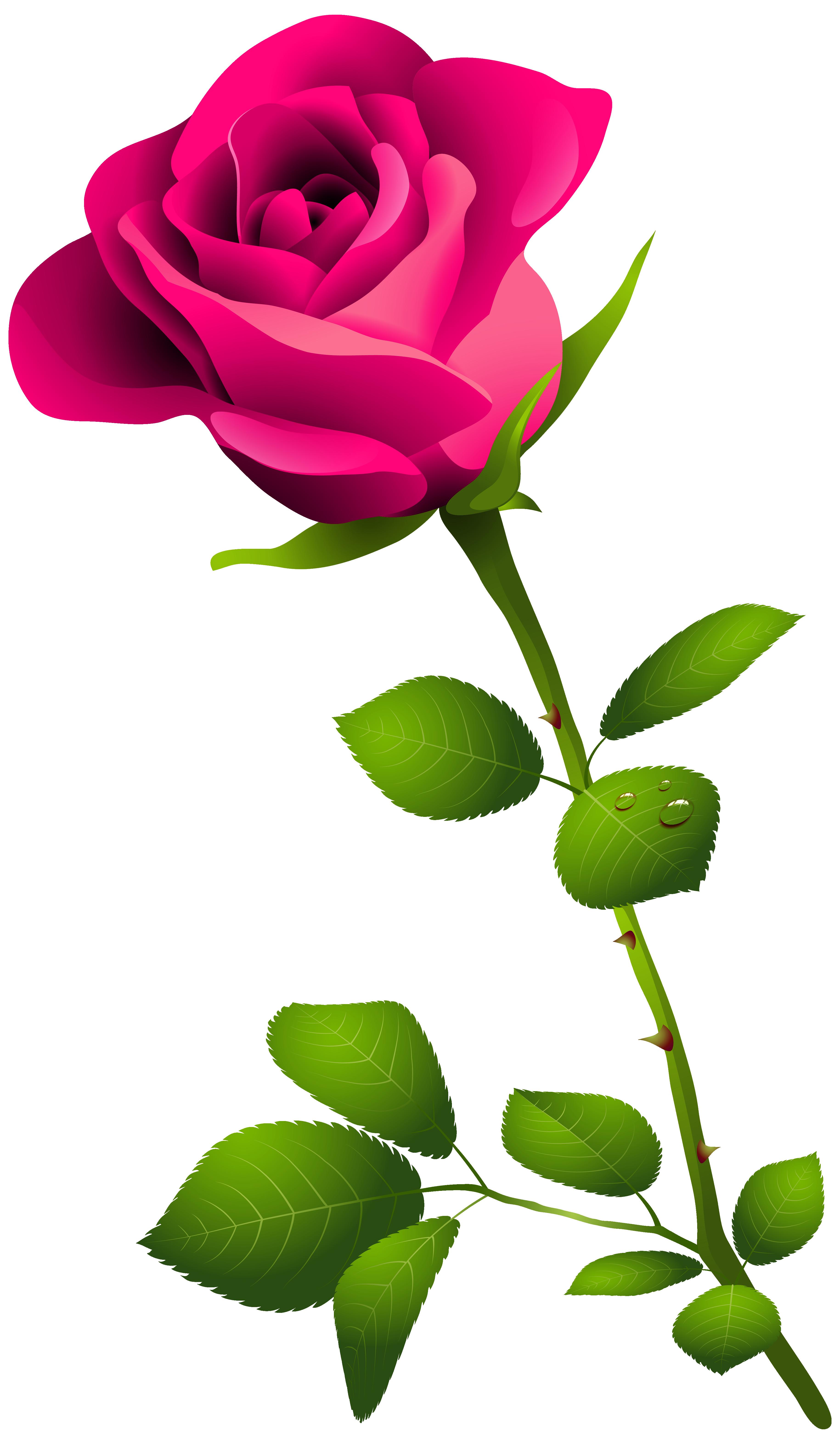 3658x6286 Pink Flower Clipart Stemmed